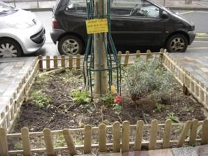 Mini jardin en pied d'arbre à paris 12e