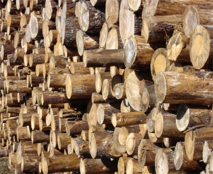 tas de bois rondins