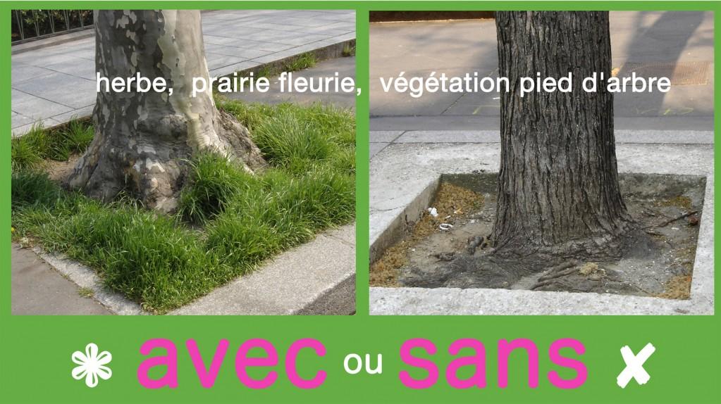 pour pieds arbres enherbés à paris, paris label 2010
