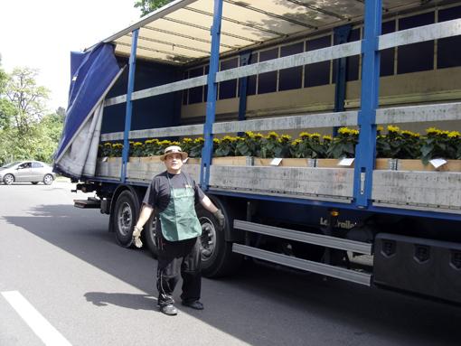 pascal le jardinier avec ses tournesols dans son camion avant le départ aux champs elysées pour l'événement Nature Capitale