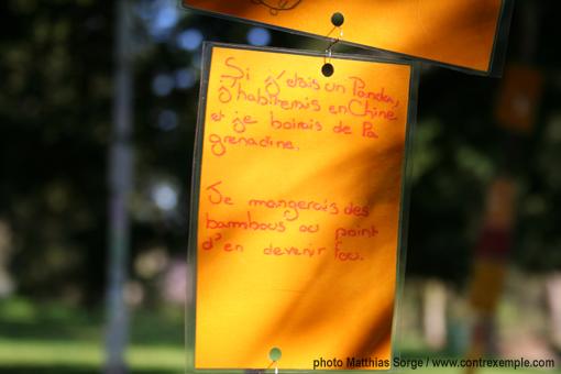 si j'étais un panda - poème dans arbre à palabres - pédagogie joyeuse - sensibilisation biodiversité pour les enfants / paris Label