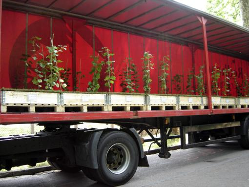 vignes d'alsace dans un écrin rouge - camion en attente au bois de vincennes pour Nature Capitale aux champs elysées - photo Paule Kingleur