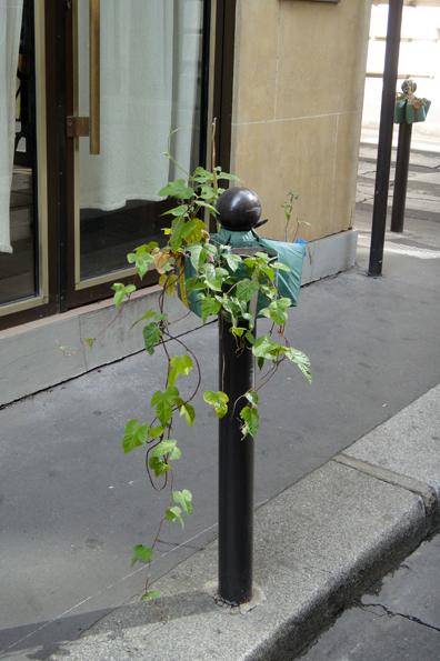 Potogreen ipomée réalisé par les enfants des écoles de Paris 2e
