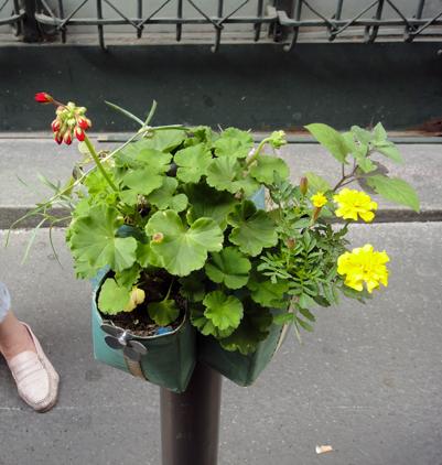 rue de hanovre dans le 2e - Potogreen ® création Paule Kingleur / Paris Label avec la Mairie du 2e, la Coopérative de rue de cirque 2r2c, la Friperie Solidaire Emmaus, la Ferme sainte Marthe, le CPN Val de Seine
