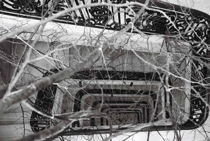 Impression de forêt de branches de tilleul dans escalier classé du siege social Louis Vuitton : installation Paule Kingleur - photos Carine Tedesco