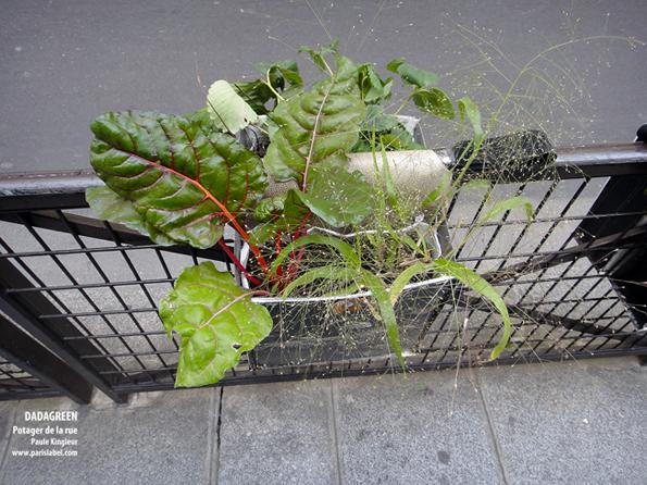Dadagreen chevauchant les grilles de la ville, potager urbain à portée de main, créé par Paule Kingleur pour Paris Label