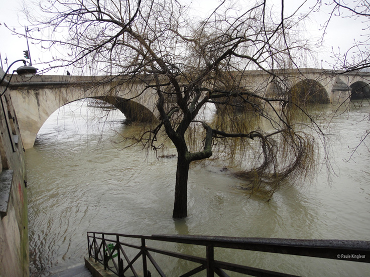 Crue de la Seine avec saule les pieds dans l'eau sur quai parisien inondé, photo Paule Kingleur