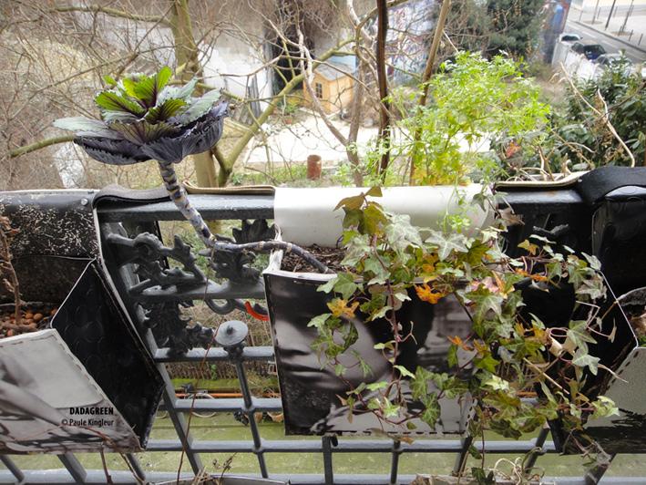 dadagreen chou d'hiver - création de jardin suspendu urbain de Paule Kingleur / Paris Label