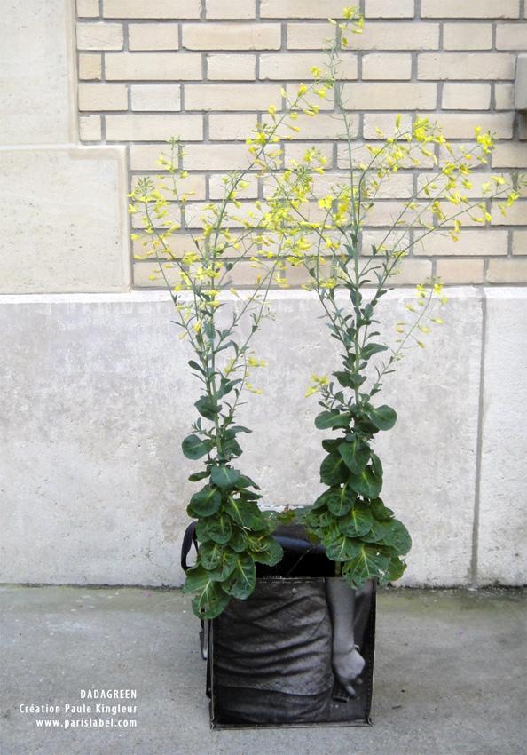 Choux en fleurs dans Dadagreen - Mai 2013 - Création Paule Kingleur pour Paris Label